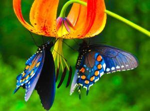bg-butterfly-blue.jpg
